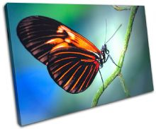Butterfly Nature Animals - 13-0155(00B)-SG32-LO